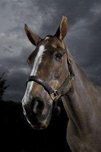 3078 Horse